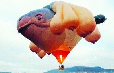动物形状的气球图片