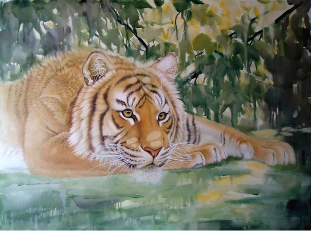 壁纸 动物 虎 老虎 桌面 640_474